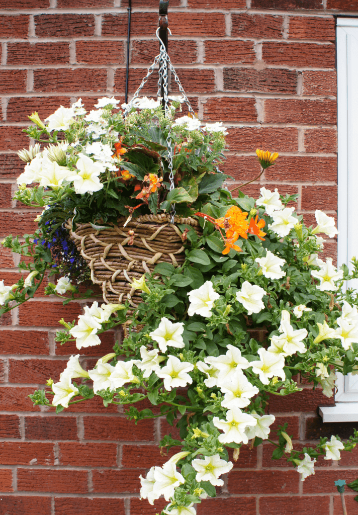 Hanging Basket Overflowing with Flowers