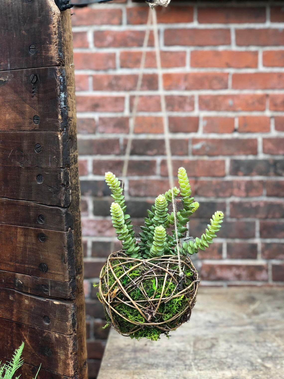 Grapevine and Moss Sphere Succulent Holder