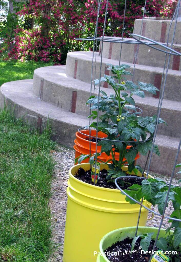 Brightly Colored Five Gallon Bucket Container Garden