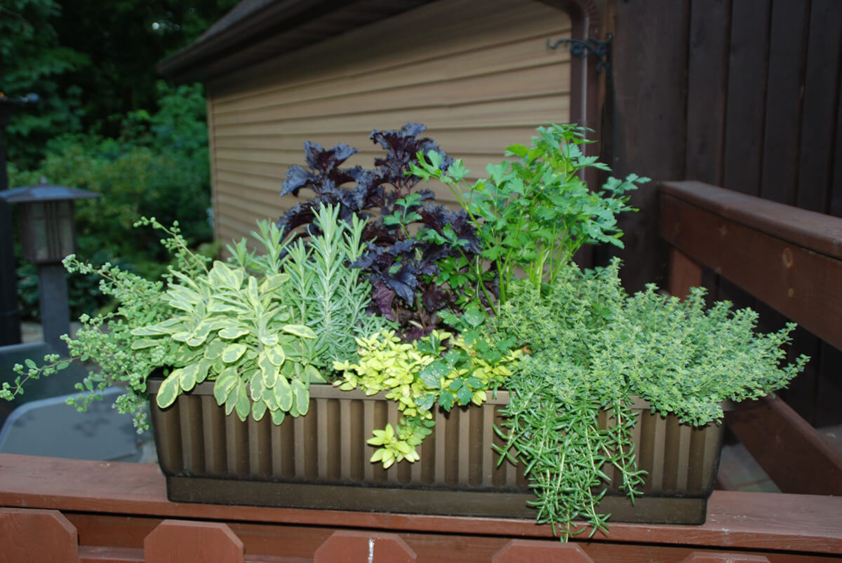 Top of the Railing Herb Garden