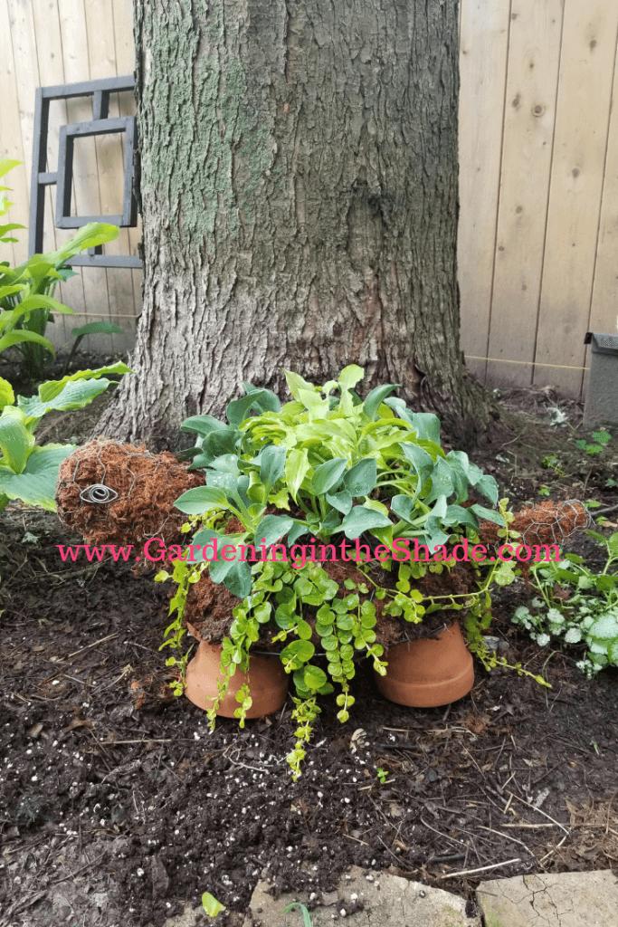 Terracotta Pot and Chicken Wire Turtle Planter