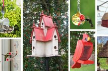 Best Bird Feeder and House Designs
