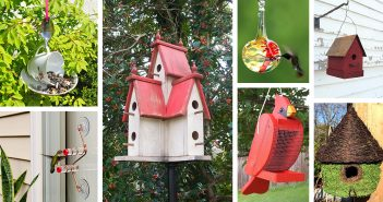 Best Bird Feeder and House Designs