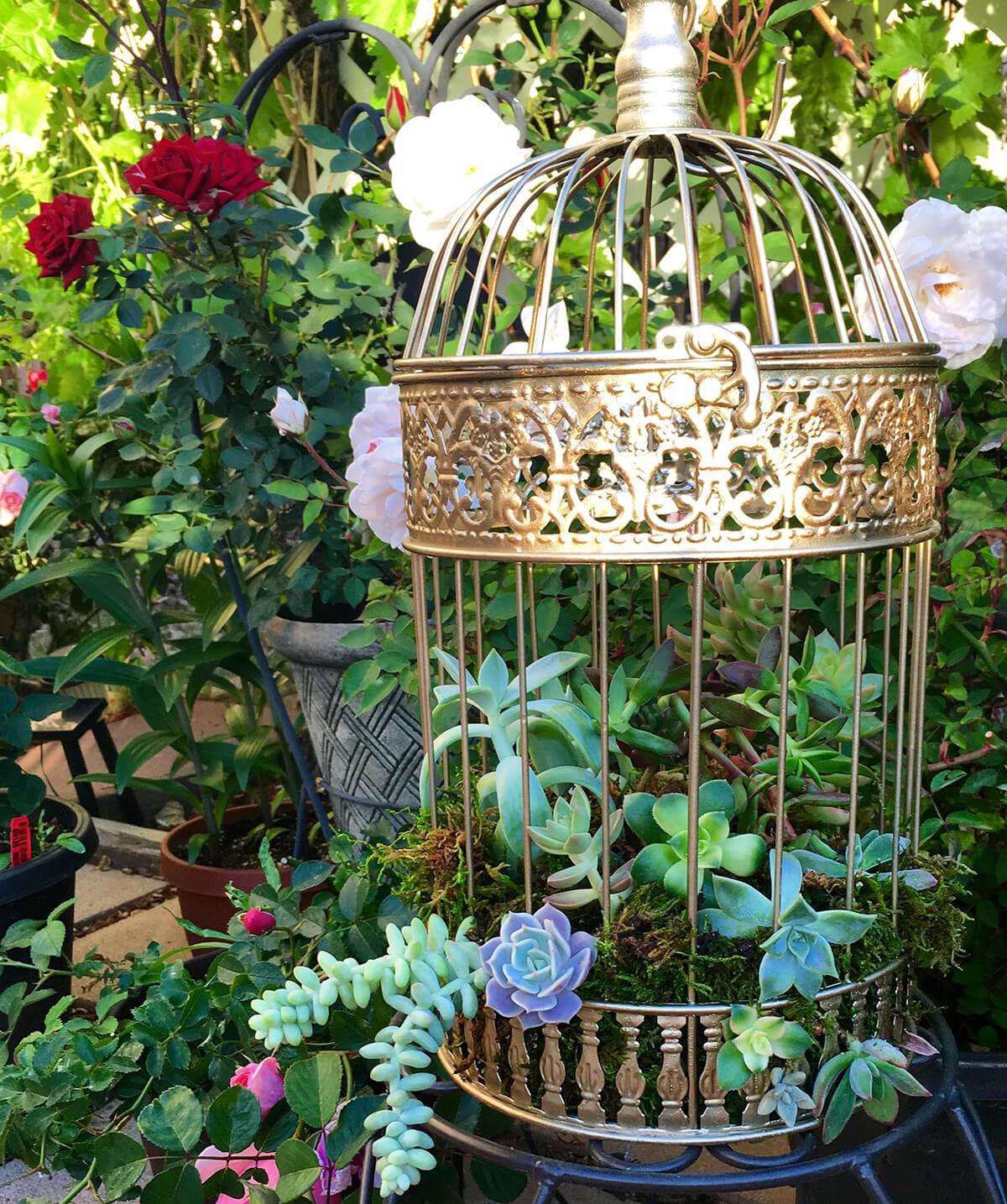 Sprawling Succulents Golden Intricate Birdcage Decoration