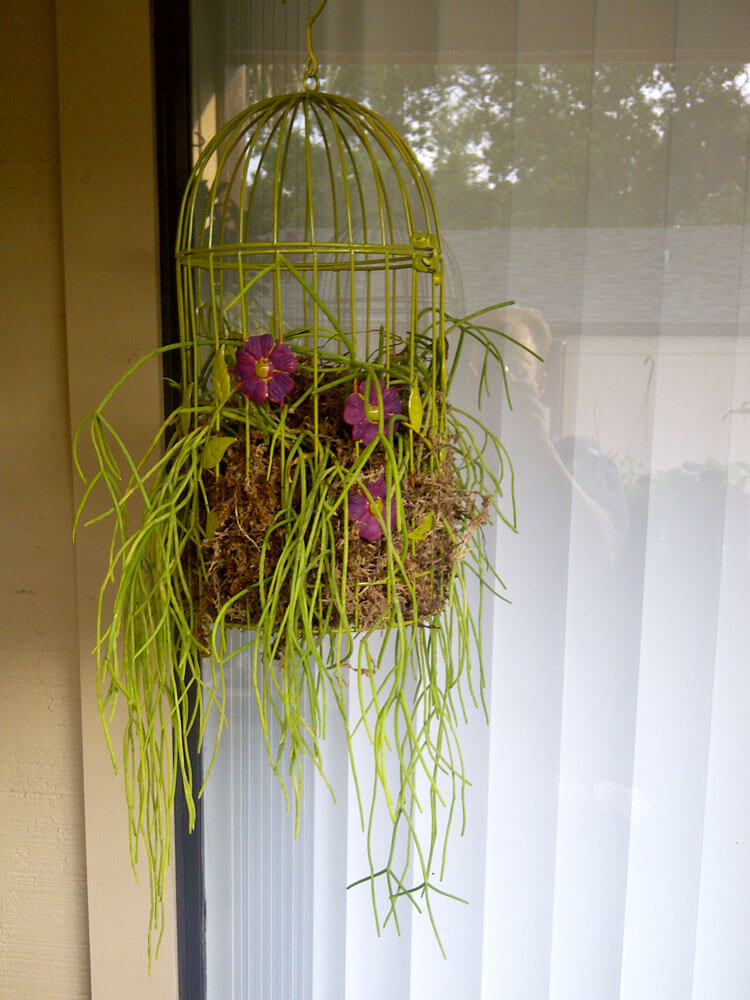 Simply Chartreuse Hanging Birdcage Plant Decoration