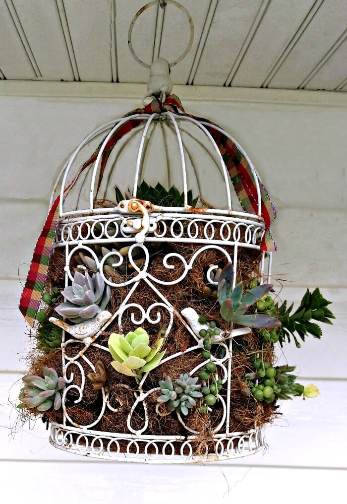 Blossoming Succulent Birdcage Hanging Planter