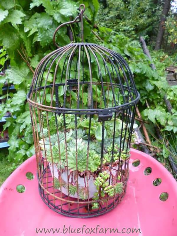 Tabletop Metal Birdcage Plant Display