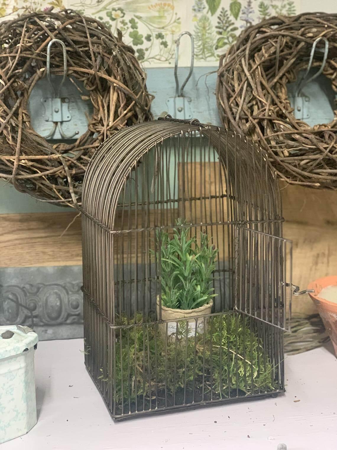 Muted Brass Birdcage Moss and Herb Garden