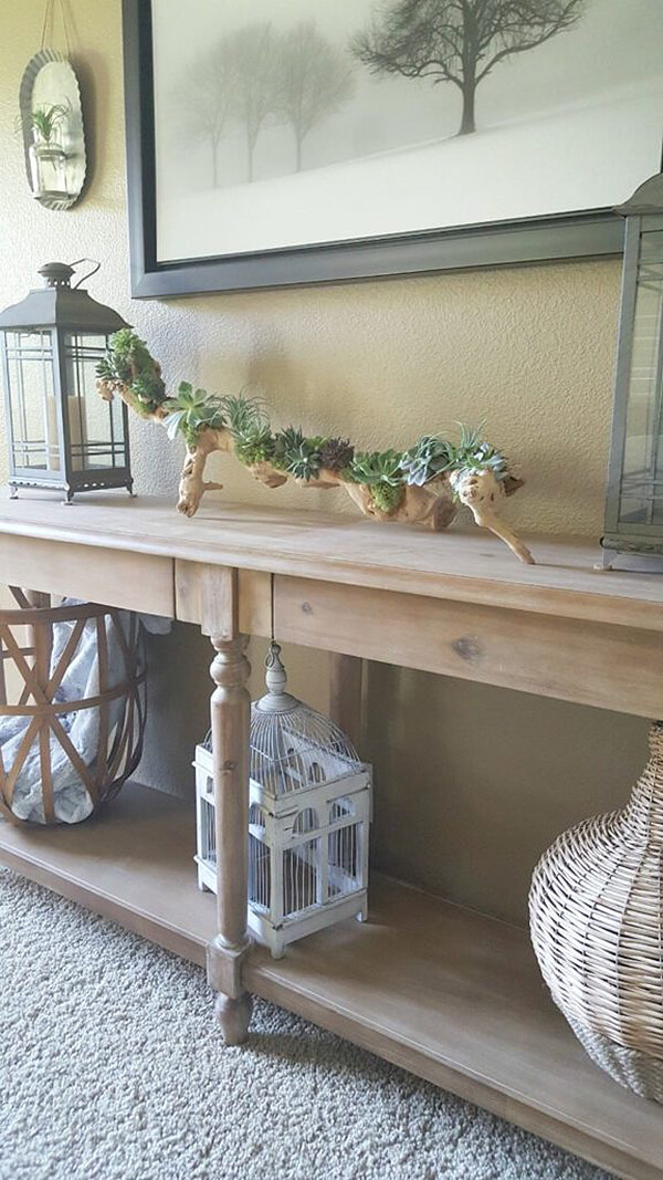 One-of-a-kind Driftwood Succulent Planter for Summer